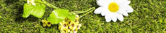 芝生の上に白い花一輪と小花数輪が置かれている